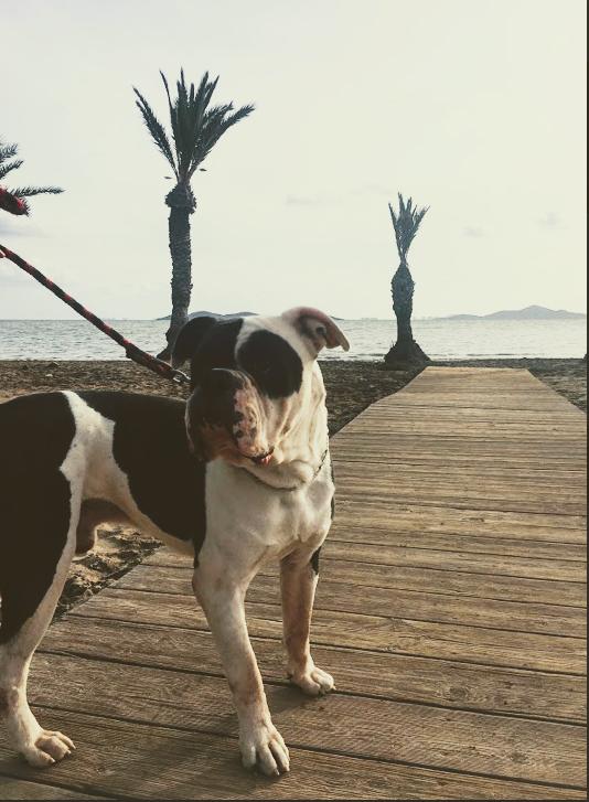 Z cestovatelského deníčku: Cesta do Španělska, autem a se psem