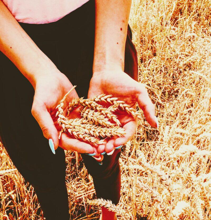 How do we prepare grains? / Jak připravujeme obilí?
